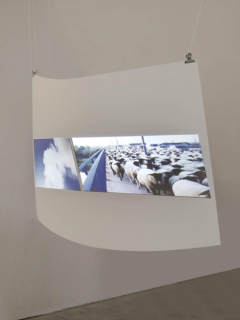Birgit Schuh, Schafe und Rauch, Videoinstallation 2018